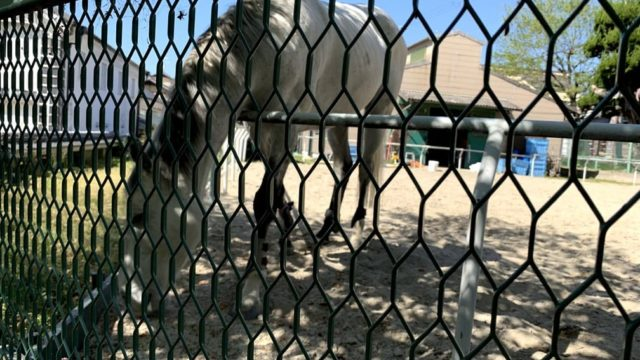 石切神社の馬