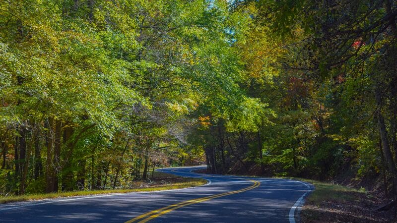 緑おいしげる林道の中の道