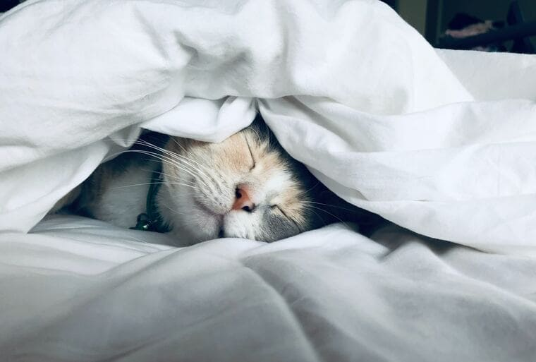 猫がすやすや眠っている所